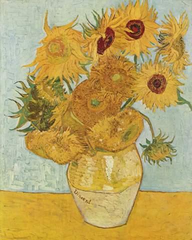 12 Sonneblumen