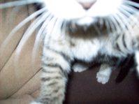 Gar nicht so leicht, ein Bild von einer quietschfidelen kleinen Katze zu machen, überall muss erst mal die Nase alles inspizieren!