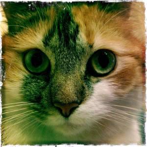 Fiepsie Katze